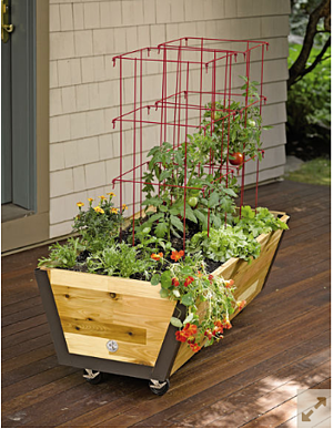 container-garden-rolling